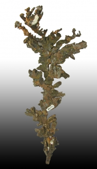 Native Copper with Barite from White Pine Mine, SW Ore Body, White Pine, Ontonogan Co., Michigan [db_pics/pics/copper6b.jpg]