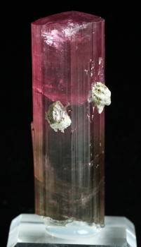 Tourmaline Var. Bi color Elbaite from Himalaya Mine, Mesa Grande, San Diego Co., California [db_pics/pics/tourm53c.jpg]